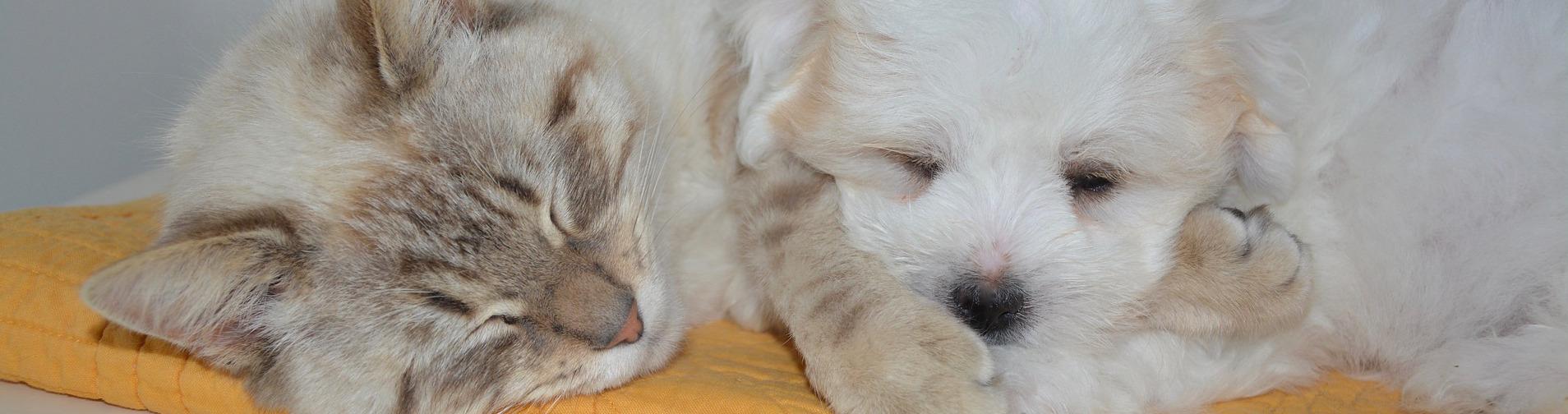 Für jeden Hund & jede Katze das richtige Bett